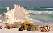 7-sea-shells-sea-beach-sand-wallpaper.preview