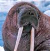 WalrusPresident's avatar