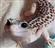 TiamatCatt's avatar